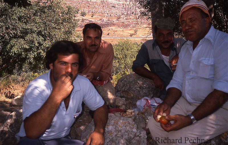 Palestinian olive pickers