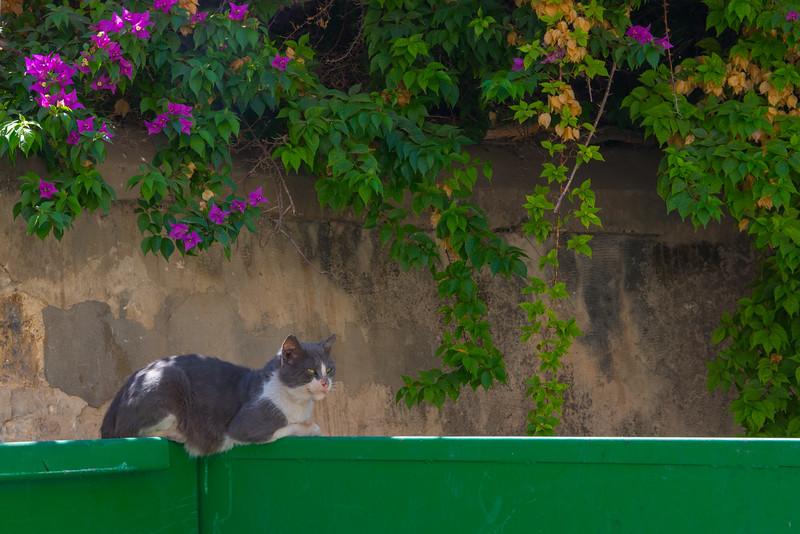 Dumpster cat, Nazareth