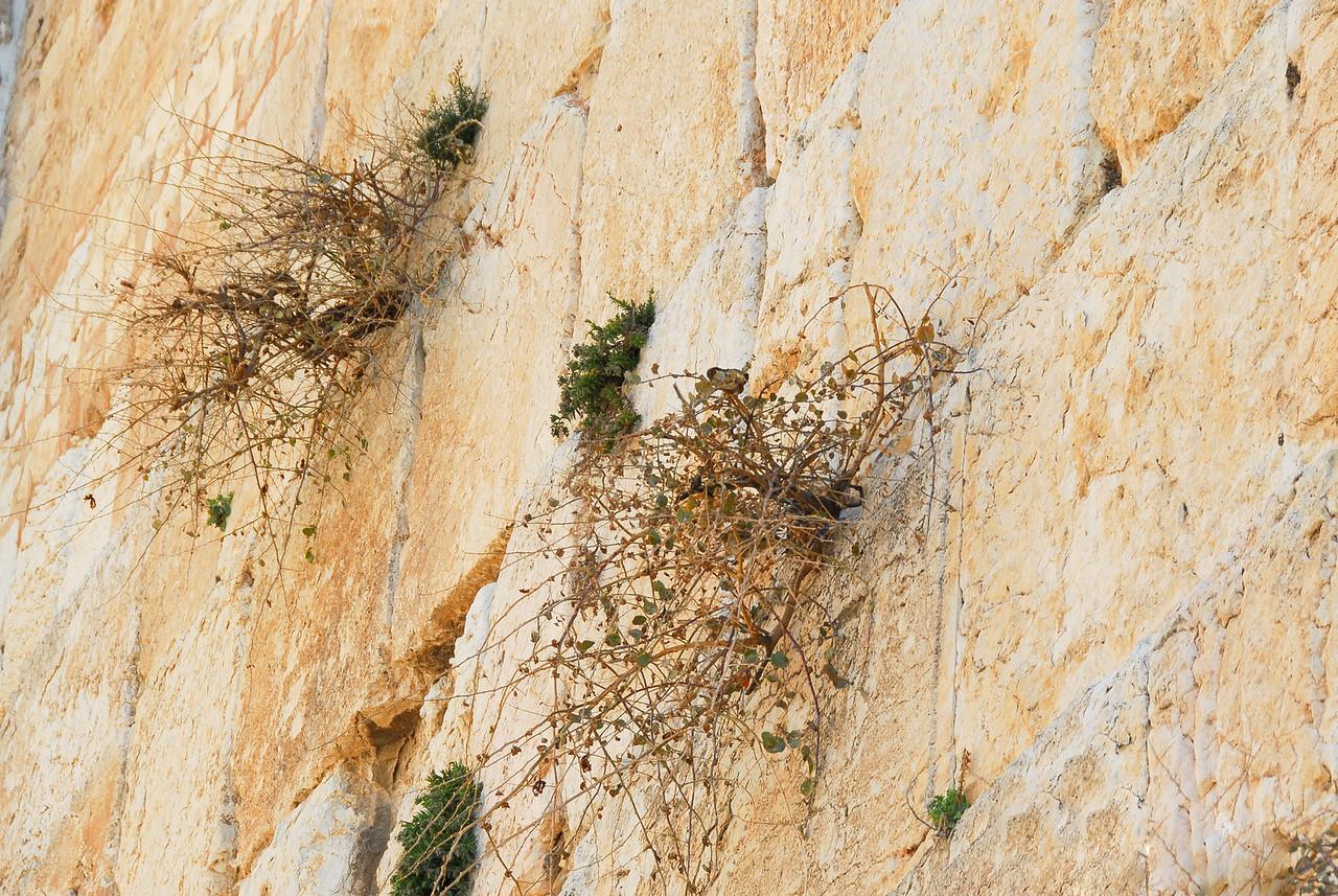 Birds Nest in the Western Wall