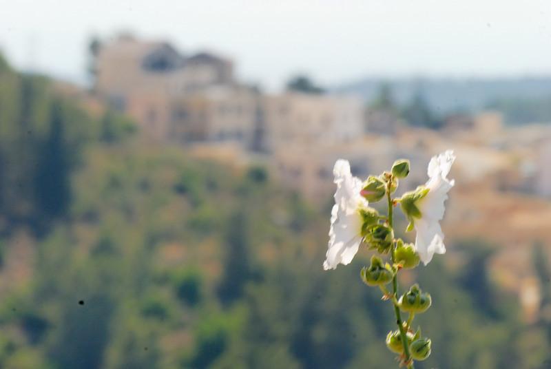 Jerusalem - Israel _3527
