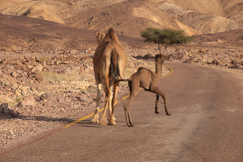 On the Road to Petra