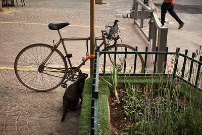 A cat observiing a pretty large prey.