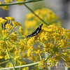 Kelebek (Butterfly)