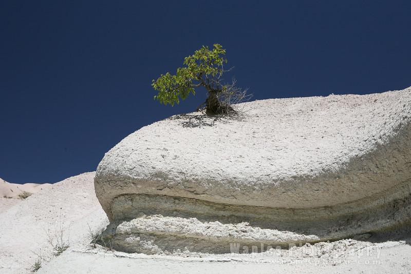 Tufa and Tree