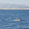 Dolphins racing toward us!