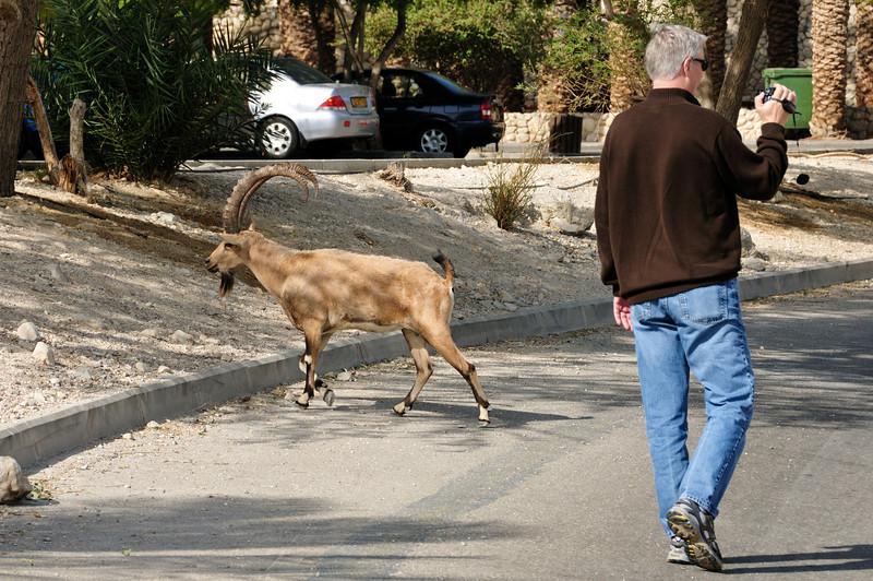 David and an ibex (similar to a mountain goat.... the ibex, not David).