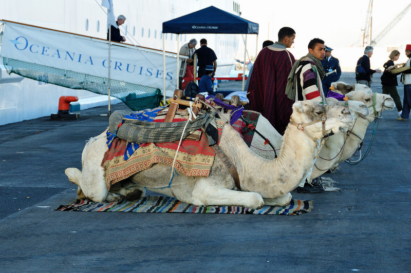 Camels met our ship in La Goulette, Tunisia.  (La Goulette is the port city for Tunis).  We didn't have any real plans for this port, so we got off the ship with the intention of hiring a taxi for a few hours.  We absolutely struck gold.  We had a full, long, and FANTASTIC day!