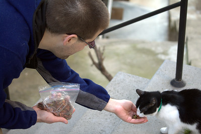 Feeding a black and white with a collar.
