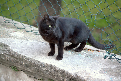 Black kitteh. Look at the white hairs on the bib.