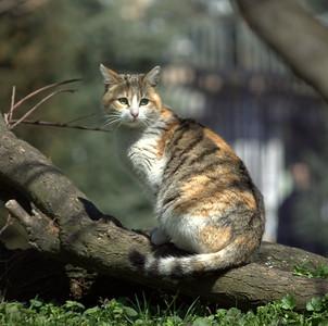 Kitteh on a tree.