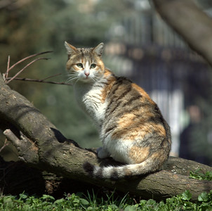 Kitteh on a tree.