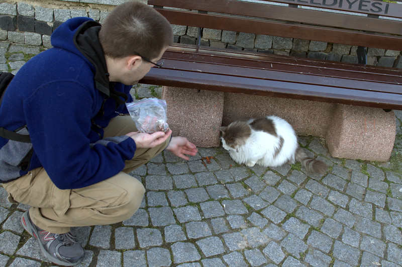 Feeding the floofycat.