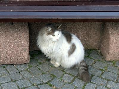 Floofy kitteh.