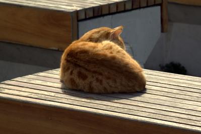 Orangie, curled up in the sun.