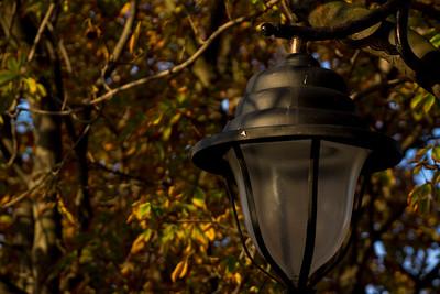 Lamplight in Trees