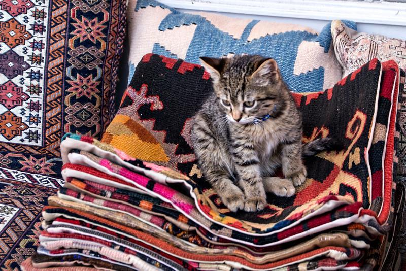 Kitty at the Arasta Bazaar