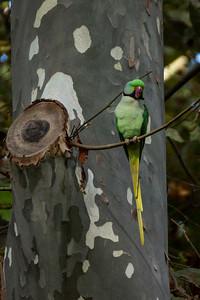 Park Parrot