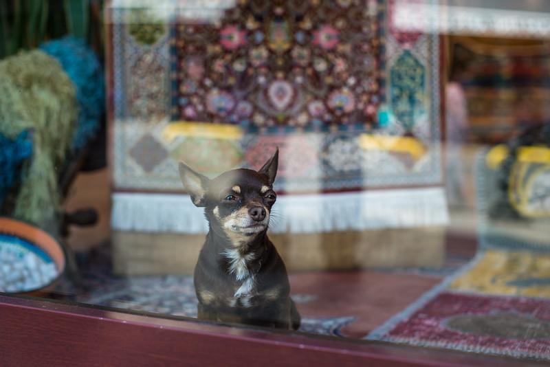 Selling rugs