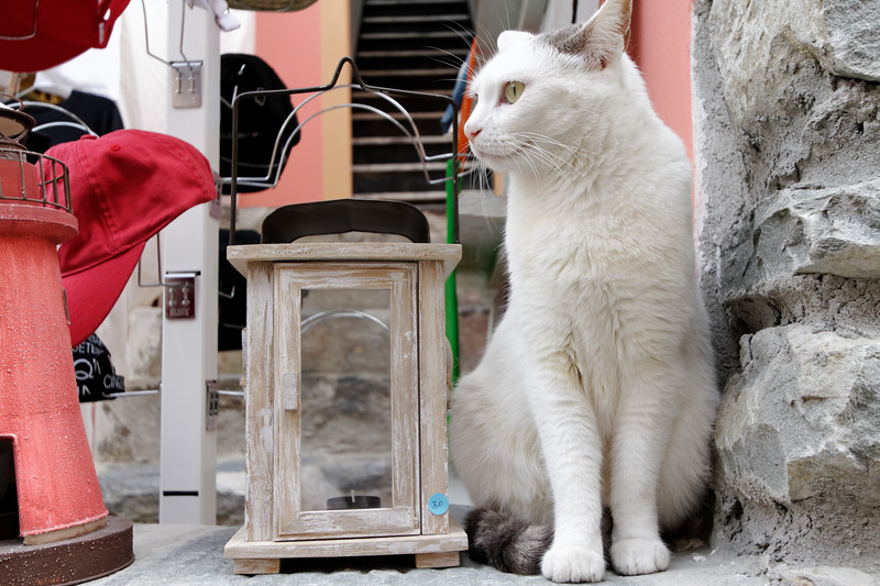 """Cinque Terre / Vernazza - this photogenic Cat was a """"resident"""" at one of the Gift Shops on the main street, and was a popular subject for many of the tourists walking by."""