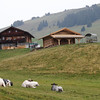 Alpi di Siusi - a local farm with some contented Alpine Cows.
