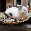 Cinque Terre / Vernazza - another picture of the photogenic Cat, taking a break from his duties.