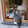 Cinque Terre / Monterosso - this Cat was sitting on the ledge of a kitchen window at one of the local seafood restaurants.  I'm sure he was waiting for a sample of the food.