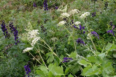 D_040 Tre Cime Pian da Rin harmonie van blauw en wit