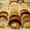 Scallops, Venice fish market
