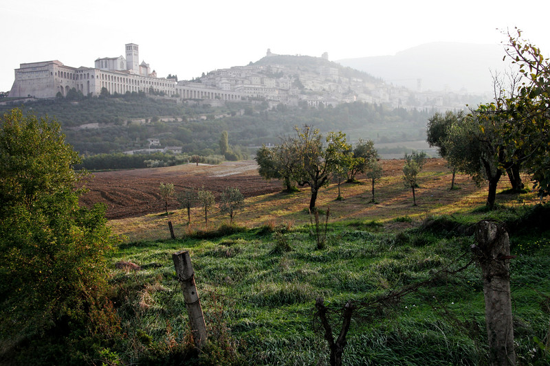Olive orchards at the base of Assisi
