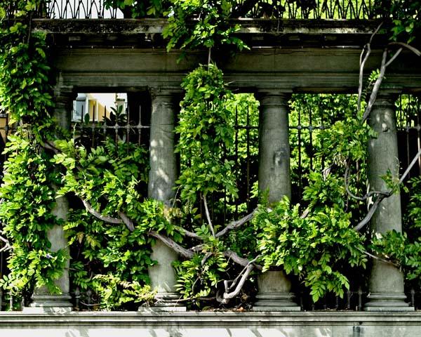 Florence Columns-Vines