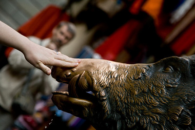 Sarah touching the snout of the wild boar statue for good luck, Florence