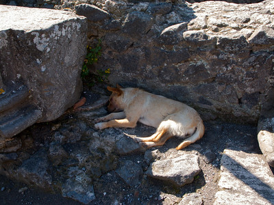 There were stray dogs all over Pompeii.