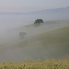 Tuscany - trees in the mist.