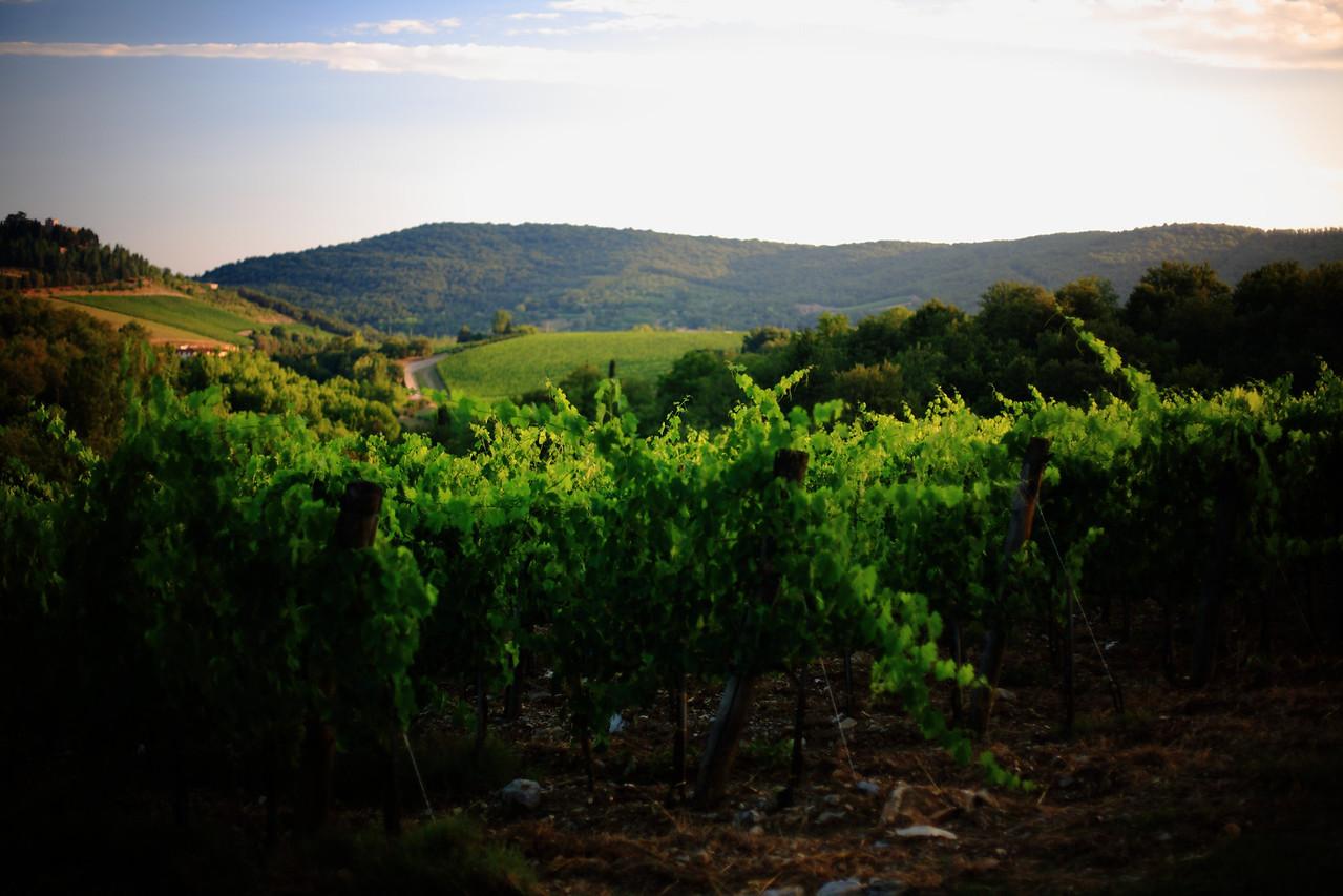 Vineyards at Castello di Spaltenna.