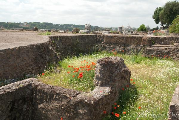 A splash of color at Palatino ruins.