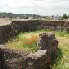 A splash of color at Palatino ruins.