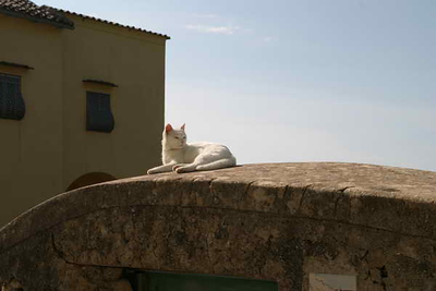 Posing cat in Procida
