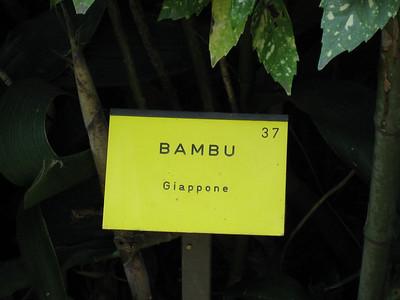 Bambu in Italy??