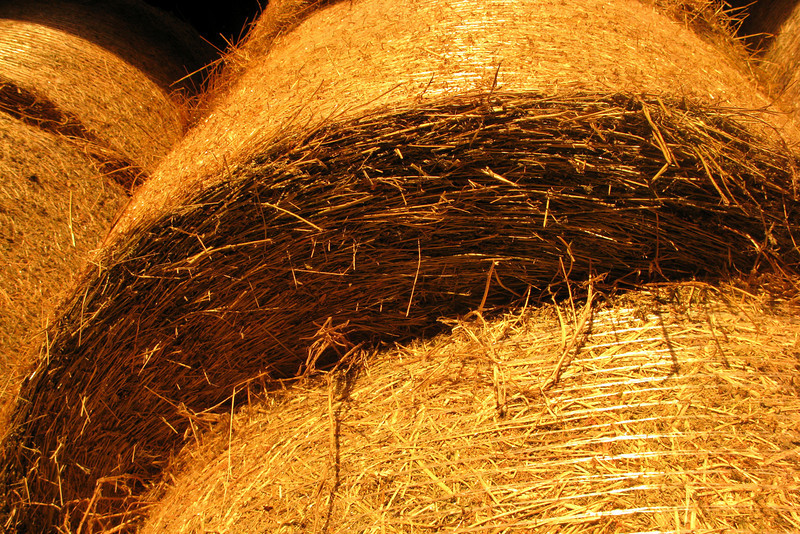 The cows are only allowed to eat hay. It keeps their milk Parmigiano-pure.