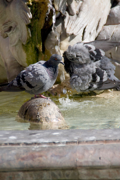 The pigeons don't care about the history.  They just want to bathe.