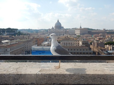 view of St. Peter's Basilica & secret passage