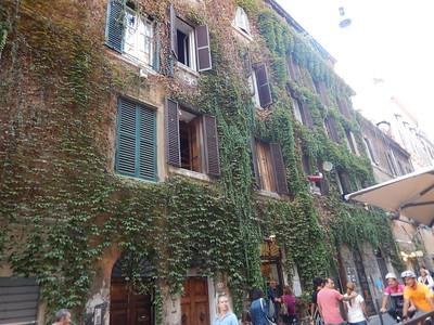 vines on buildings