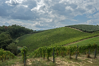 On the Tuscan hills, vineyards and olive trees