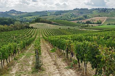 Vineyard at Fattoria Poggio Alloro