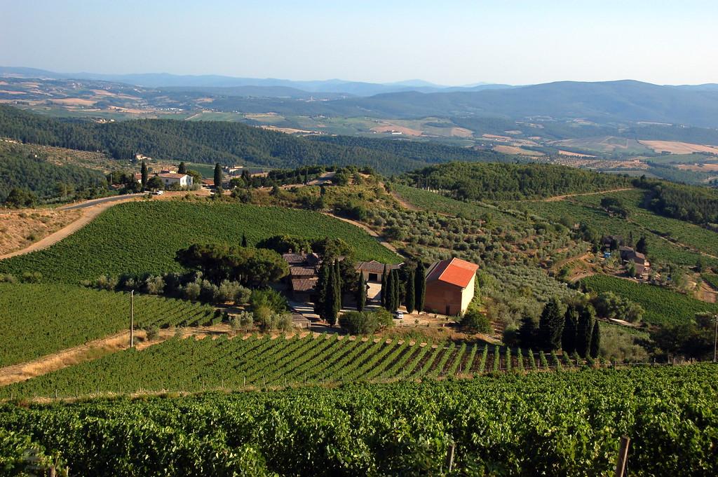 Chianti vineyards