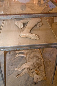 Pompeii Fossil and His Dog