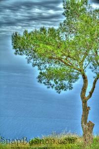 Lone Tree of Capri