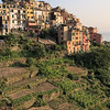 Vineyards outside the village of Corniglia