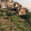 Vineyards outside the village of Corniglia