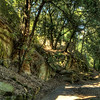 Fiesole, Italy – Secluded Park – I walked down a pathway while leaving the monastery of San Francisco.  This winding pathway eventually took me back into the village.  The time spent on this walk was well worth the time exploring it.